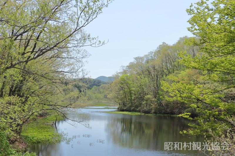 矢ノ原湿原の新緑